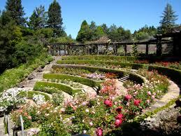 a wonderful day at the berkeley rose garden u2013