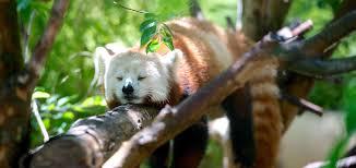 come si dorme bene qui cosa fare quando non si riesce a dormire consigli a tutto tondo