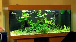 Aquascape Shop Aquascape Ecosystem Animax Us