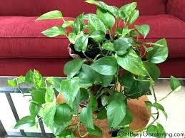 house plants low light indoor plant low light best indoor plants best indoor plants indoor