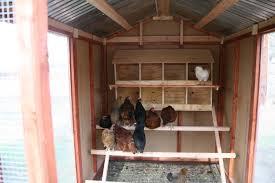 best chicken house interior with inside a chicken coop plans 12178