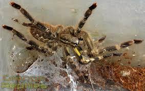 grange reptiles available invertebrates