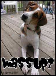 Wassup Meme - wassup cute dog glitter graphic greeting comment meme or gif