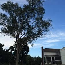a alpha tree company 36 photos 34 reviews tree services