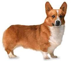 imagenes de animales y cosas z a p a t e r o l a n d i a personas y animales