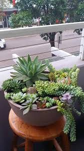 best 25 succulents ideas on pinterest succulents garden