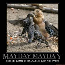 May Day Meme - may day 2015 all the memes you need to see heavy com page 7