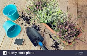flowers in garden images planting stock photos u0026 planting stock images alamy