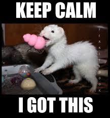 Ferret Meme - coolest 27 ferret meme wallpaper site wallpaper site