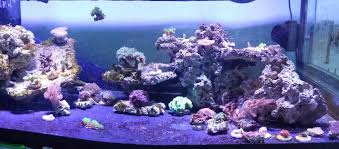 Marine Aquascaping Techniques Aquascaping Rears Its Ugly Head Again Reef2reef Saltwater And