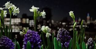 spring on speed time lapse video captures 3 years of blooming