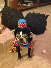Funny Dog Halloween Costumes 25 Small Dog Halloween Costumes Ideas Small