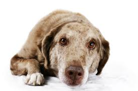 11 reasons for chattering teeth in dogs video simply for dogs