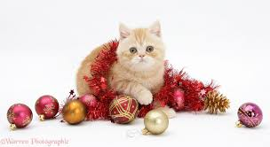 ginger kitten with red tinsel and christmas baubles photo wp18111