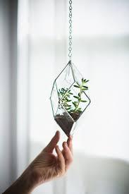 best 25 glass terrarium ideas on pinterest glass terrarium
