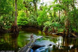 Florida rivers images 16 of florida 39 s most relaxing rivers jpg