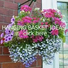 Summer Flower Garden Ideas - 160 best hanging baskets images on pinterest flowers gardening