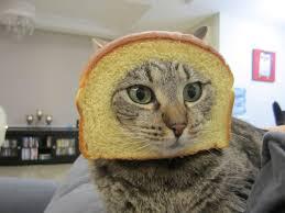 Cat Breading Meme - cat breading in action bad kitty southpark boingboing