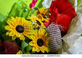 sunflower wrapping paper a sunflower on white paper stock images royalty free images
