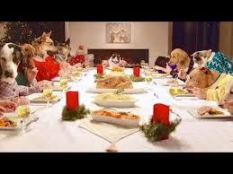 dogs at dinner table freshpet holiday feast 13 dogs and 1 cat eating with human hands
