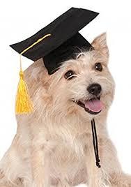 dog graduation cap rubie s black graduation hat pet accessory medium