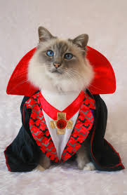 animals halloween every cat wants to be a vampire for halloween but not even this