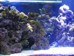 Aquascaping Rocks Welcome To Our Marine Aquarium Rock Aquascaping