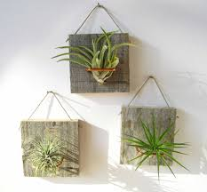 ionatha small form airplant and barn wood 12 50 via etsy