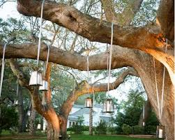 outdoor wedding decorations for trees search dreams for
