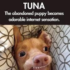 Tuna The Dog Meme - tuna the epic dog by steven12803 meme center