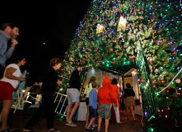 delray will replace unsafe 100 foot tree for nearly