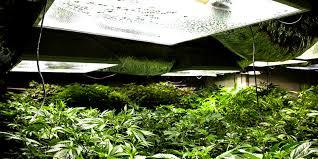 Grow Room Lights The Grow Room Archives I Love Growing Marijuana