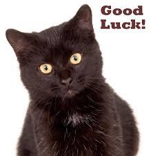 Good Luck Cat Meme - black cat appreciation day page 22 pet forums community