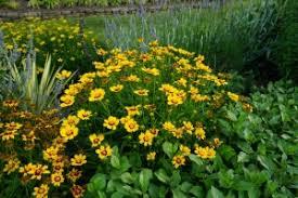 the ornamental garden in june piedmont master gardeners