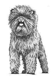 affenpinscher joe banana joe u0027s westminster dog show win set off a frenzy for