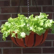 top 10 best vegetable crops for pots top inspired