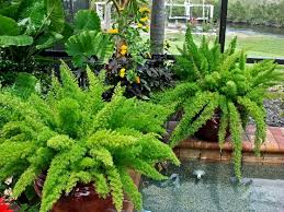 download plants used in landscaping garden design