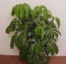 common indoor house plants 84 best beautiful houseplants images on