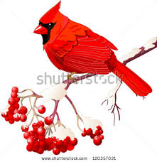 drawn bird red robin pencil and in color drawn bird red robin