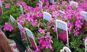 Nursery Plant Supplies by Half Off Plants And More At Reems Creek Nursery Reems Creek