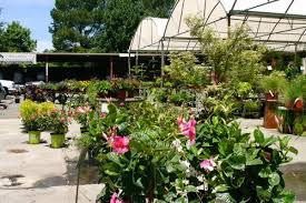 Raleigh Botanical Garden Norwood Road Garden Raleigh Nc Perennials Annuals 70 Res