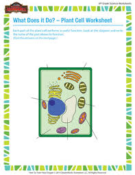 what does it a do u2013 plant cell worksheet u2013 6th grade biology
