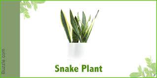 indoor plants that don t need sunlight houseplants that dont need much water hard to kill houseplants