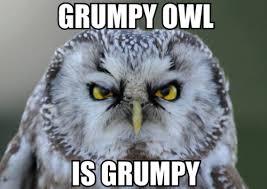 Funny Owl Meme - owl birthday meme 28 images owl meme happy birthday owl meme