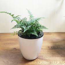 small potted plants china automatic water plant china automatic water plant shopping