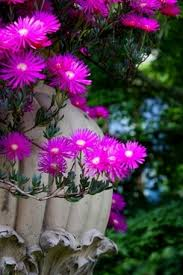 garden flower wallpaper free stock photos download 13 547 free