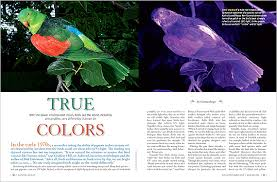 uv light for birds true colors how birds see the world