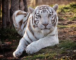 national tiger sanctuary