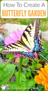 flower garden with butterflies tips to create a butterfly