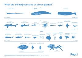 40 meter to feet how big are the largest marine animals iflscience